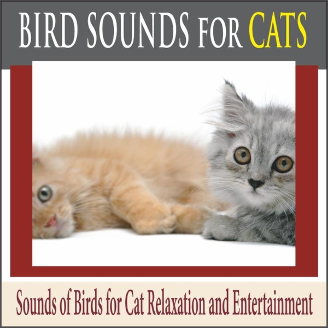 Feline Forest Sounds by Steven Current - Pandora