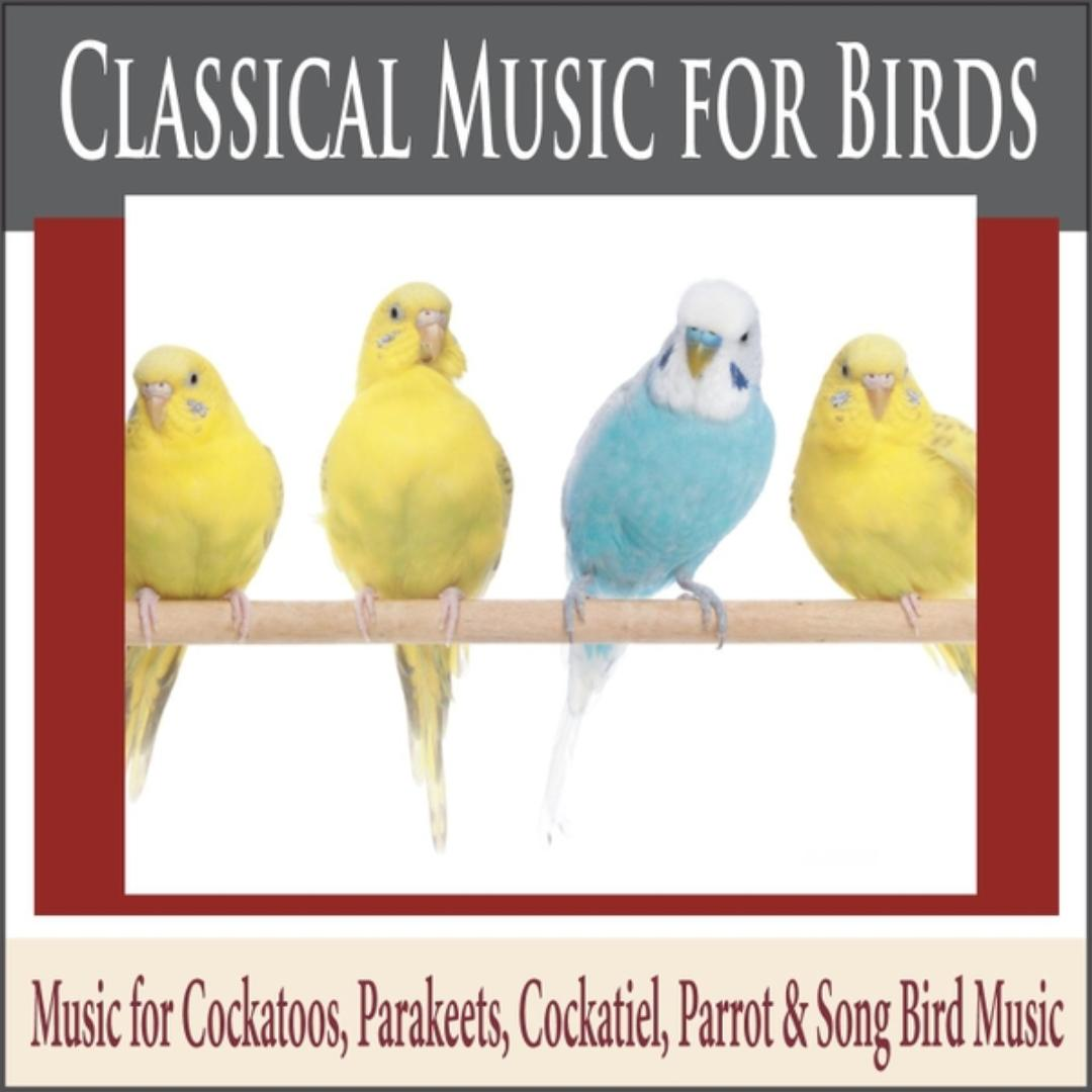 Classical Music For Birds: Music For Cockatoos, Parakeets, Cockatiel